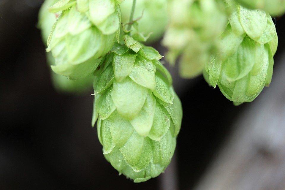 MEJOR QUE MUCHOS ANALGÉSICOS: la cerveza, por supuesto
