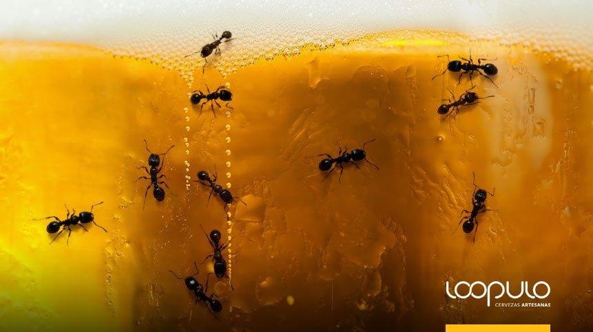 Cerveza con hormigas – Loopulo