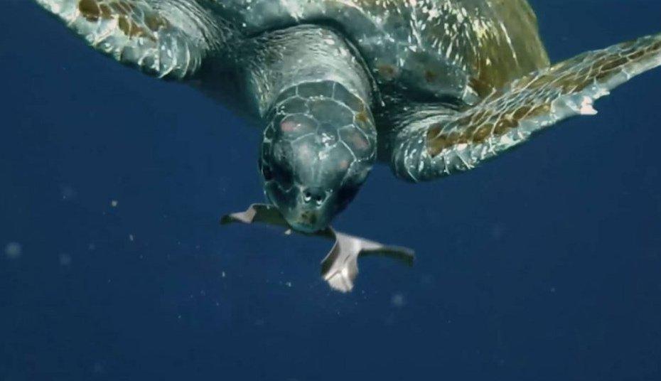 Una cervecera crea anillos para sus Six Packs comestible para las tortugas – Loopulo