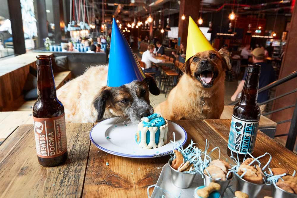 DOG PAWTIES las fiestas de cumpleaños para perros de BrewDog