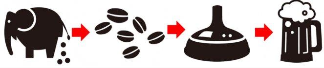 EXCREMENTOS de elefante para elaborar una cerveza de café – Loopulo