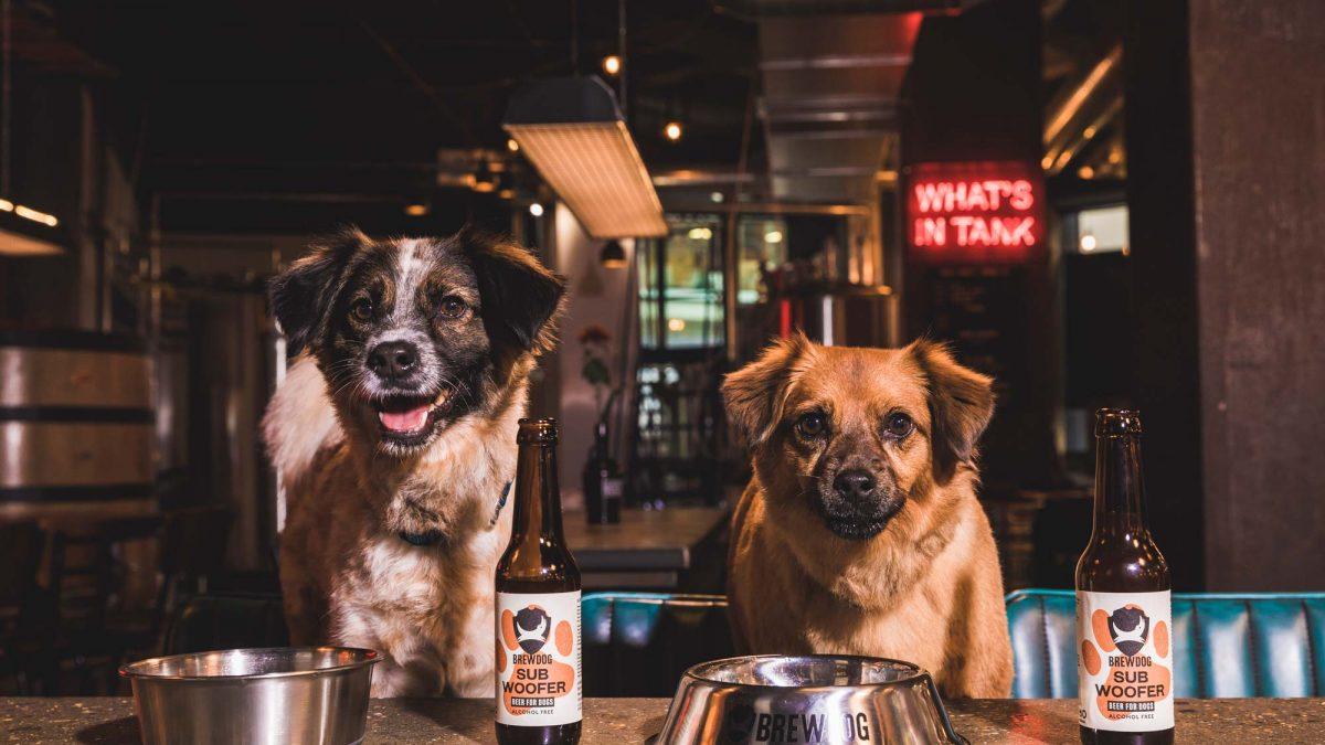 Subwoofer IPA, la cerveza artesana para perros de BrewDog