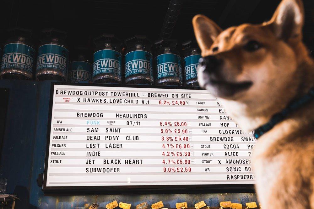 Subwoofer IPA, la cerveza artesana para perros de BrewDog – Loopulo