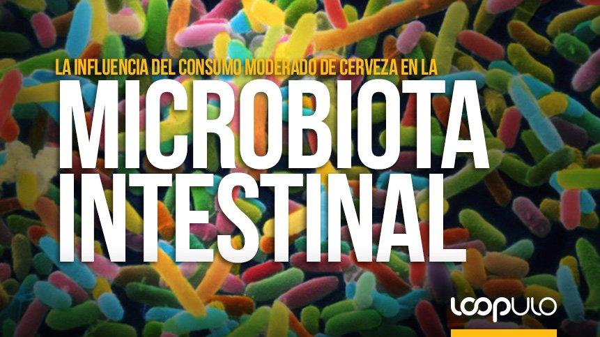 ¿Influye el consumo moderado de cerveza en la microbiota intestinal?