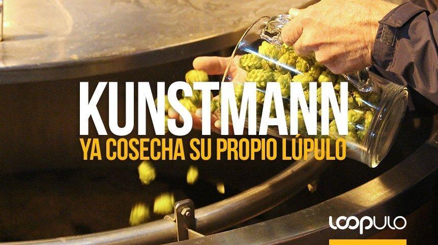 Kunstmann ya cosecha su propio lúpulo en el sur de Chile