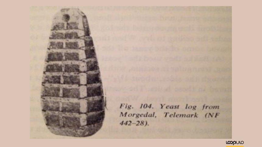 Tronco de Levadura de 1621 – Loopulo