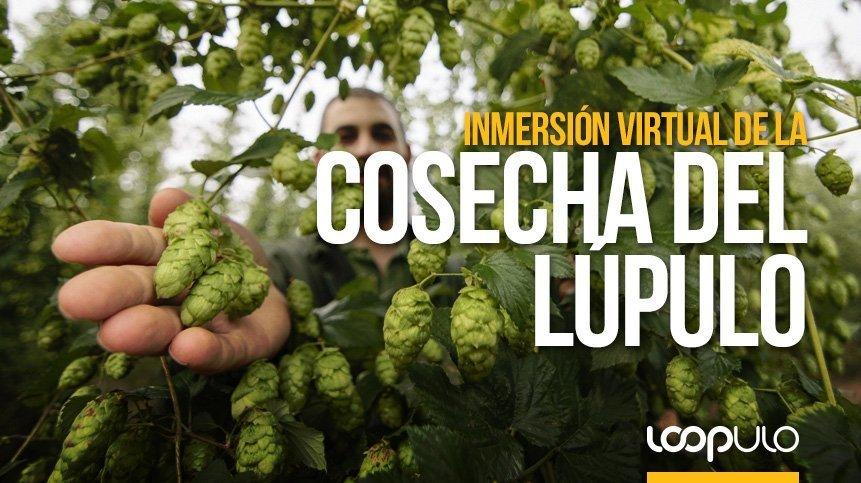 MEGA celebra la cosecha del lúpulo con una inmersión virtual