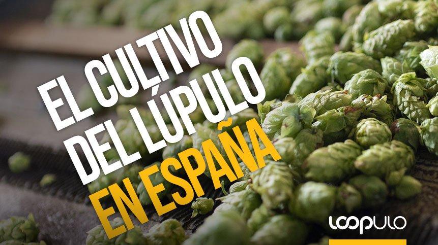 El lúpulo español nace a orillas de la Ribera del Órbigo