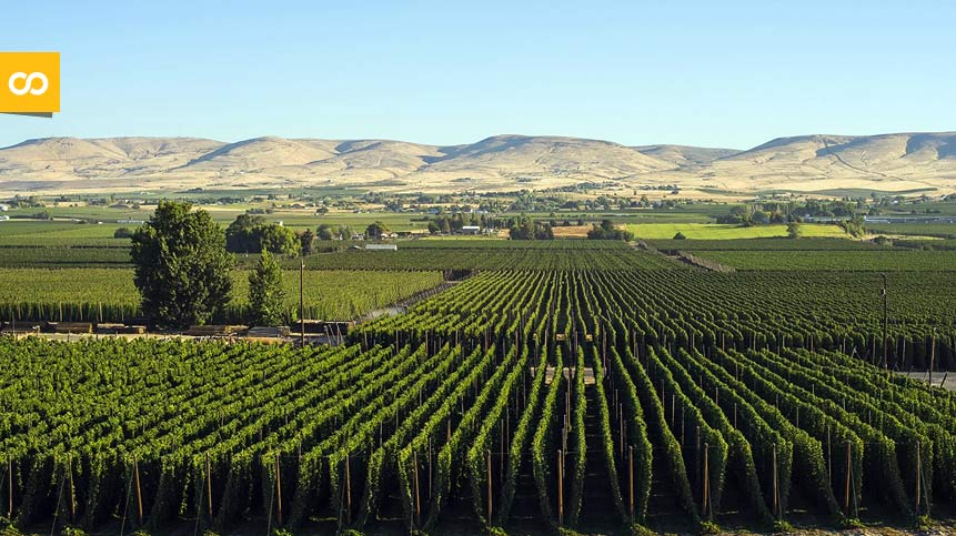 Yakima Valley, la tierra sagrada de los cerveceros | Loopulo