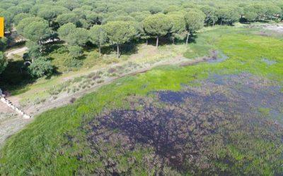 Heineken devuelve a Doñana 1.000 millones de litros de agua al año