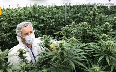 El gobernador de Pensilvania, Tom Wolf, plantea legalizar la marihuana y rebajar los impuestos sobre el alcohol
