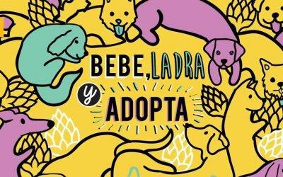Cerveza Apolo, crafts con causa para salvar perros abandonados