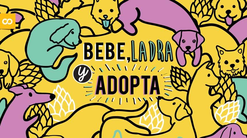 Cerveza Apolo, crafts con causa para salvar perros abandonados | Loopulo